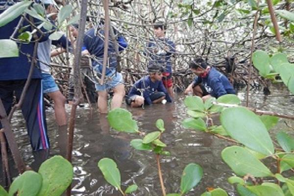 Pengambilan Sampel di Hutan Manggrove, Barru 2016